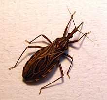 La vinchuca y el mal de Chagas Glosario Médico
