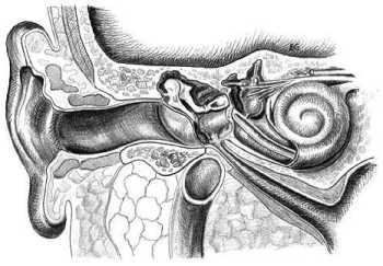 Examen del octavo par: Un instrumento para evaluar la audición y los trastornos del equilibrio Exámenes y Equipo Médico