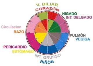 Ciclo Circadiano Neurología