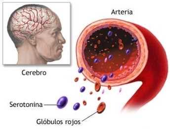 La serotonina y el bienestar Dermatología